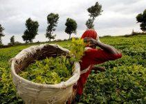 America e Kenya concludono un accordo commerciale